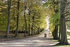 Tree-Lined Avenue (Bri_J) Tags: chatsworthhousegardens bakewell derbyshire uk chatsworthhouse chatsworth statelyhome nikon d7200 autumn fall trees path