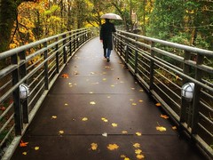 The Path Of Stars (Ian Sane) Tags: ian sane images thepathofstars man umbrella rain pedestrian bridge reed college autumn fall colors candid street photography phoneography iphoneography apple iphone 8 plus cell phone smartphone