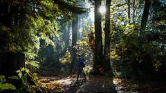 Stanley Park Vancouver (Paul Chan - Canada) Tags: nikond500 nikonafs1755mm28geddx stanleypark cityofvancouver trees biker bikerontrail bikerintrees paulchancanada 201711105005605 sun beautifultrail beautifulbiketrail prospectpointinstanleypark forest canada sunburst inexplore explore20171114 explore