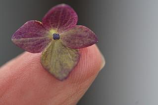 On My Fingertip