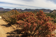 Hops and the Flinders (Bev-lyn) Tags: hops outdoors nature flinderranges southaustralialandscape red mountains