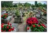 16.09.16.16.48.39 Nürnberg, Johannisfriedhof (PROFI-LACK-TISCH) Tags: deutschland germany grab graves grave gräber europa europe bavaria bayern francs franken nürnberg