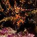 JRR_2646 - Lobster Upside-down