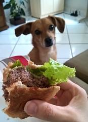 larica da mina (medeirosisabel16) Tags: dog cachorro fome hunger celular cell phone guaratinguetá fofura love