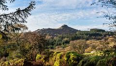 Leather Tor from the track to Deancombe - NK2_4889 (Jean Fry) Tags: dartmoor dartmoornationalpark devon englanduk leathertor moorland nationalparks trees uk westcountry tors tracks dartmoortracks mossyrocks mossywalls