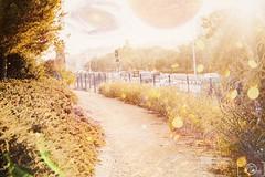 322-365 (danidelgado.es) Tags: adobe alicante canon contraste colour composition digital day eos 365 españa spain film inspiracion art light color inspiration luz magic photoshop project lightroom sky yellow retouch red nature naturaleza love cloud sun m10 eosm