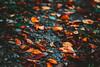 IMG_7971 (Tsikura) Tags: autumn autumncolours sakartvelo nature canon landscape yellow orrange orange colours vine wine georgia კარალიოკი ჩირი 50mm