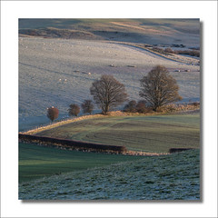 Family (johnkaysleftleg) Tags: canonef70200mmf40usm morninglight canon760d fields frost trees sheep northyorksmoors northyorkshiremoors clevelandhills cliffrigg roseberrytopping morning