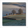 Family (johnkaysleftleg) Tags: canonef70200mmf40usm morninglight canon760d fields frost trees sheep northyorksmoors northyorkshiremoors clevelandhills cliffrigg roseberrytopping morning