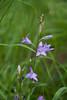 CKuchem-6730 (christine_kuchem) Tags: bach uferpflanzen wiesenblume