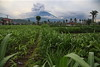 Mt. Agung eruption (Proxodimec) Tags: volcano agung eruption bali asia travel tourism danger disaster ash smoke nature