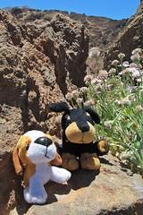 friends near the volcano :) (green_lover) Tags: toys dogs rocks teidenationalpark tenerife plants funny two 7dwf