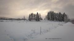 20171129001159 (koppomcolors) Tags: koppomcolors winter vinter värmland varmland snö snow sweden sverige scandinavia