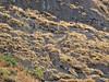DSCN4083 (Prof.Suresh G. Isave) Tags: highest peak maharashtra treks near pune sahyadri mumbai hard trek religious malshej ghat ratangad bhandardara dam randha fall darya alang madan kulang