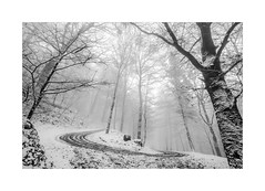 The Icy Way (W.Utsch) Tags: winter landscape landschaft schnee frost nebel fog brume brouillard nebbia