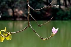 holding on (Ruby Ferreira ®) Tags: lake lago park parque teia web dof bokeh