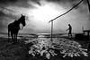 CWC 624 - Mahabalipuram (Raghunathan Anbazhagan) Tags: india tamilnadu people horse mahabalipuram beach ocean water sea man walking clouds sky cwc cwc624 chennaiweekendclickers mamallapuram blackandwhite bnw monochrome mono