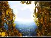 Im Weinberg - Dans le vignoble (chelis6252) Tags: h himmel weinberg landschaft nrw