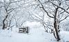 Winter wonderland (Guido de Kleijn) Tags: solleveld guidodekleijn nikond500 nikon1680f28 dunes dunea monster thehague denhaag zuidhollandslandschap snow sneeuw