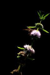 IMG_8401 (Bastian Scholt) Tags: insekt wespe natur