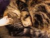 Ruhe (Antje_Neufing) Tags: katze momo ruhe stille schlaf cat face gesicht love süs sweet fuji x10