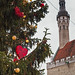 Christmas Tree at the Town Hall Square in Tallinn