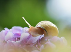 Snail dream / Rêve d'escargot (Anabelle67) Tags: france europe snail escargot flou flower flowerinsect flore fleur pinkflower flickr tamron90mmmacro tamronfrance tamron90mmf28 tamron nikonfrance nikonphotographie nikond5300 nikon naturebynikon naturelovers nature fantasticnature artphoto fineart ambience light lumière macroworld macrophoto macrocapture macroofourworld macrophotographie macroperfection macrodreams macro macrolover macroinsects bokehlicious bokeh boken photography photographie photo photooftheday