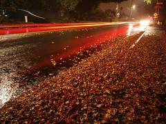 Autumn, While it Lasts (RZ68) Tags: longexposure lg lgg6 phone camera lighttrails leaves wet rain autumn reflections fall street road shower night