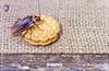 كيفية القضاء على الصراصير داخل الثلاجة- خطوات بسيطة وسهلة لطرد الصراصير خارج المنزل (OrkidaPest) Tags: الصراصير حشرات