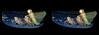 New Dragonfly Emerges From Exuvia 2 - Crosseye 3D (DarkOnus) Tags: newly emerged dragonfly exuvia shed exoskeleton closeup macro pennsylvania bucks county pool insect predator ttw oob oof choo train dance conga line 3d stereogram stereography stereo panasonic lumix dmcfz35 new emerges crossview crosseye