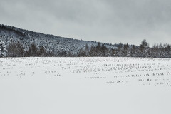 Leppe (Joerg Marx) Tags: wald bäume licht schnee landschaft winter forest wood woodland trees rural light landscape snow