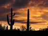 Silhouette Sky (zoniedude1) Tags: arizona desert sunset sonorandesert skyline beauty silhouettesky clouds saguarocactus carnegieagigantea saguaro silhouette colorful evening sky cactus glowing colors az sundown skyshow arizonasunset lookingwest skyscape peace solitude outdoors adventure exploration discovery hieroglyphicmountains maricopacounty outinthewild southwest nature canonpowershotg12 pspx9 zoniedude1 earthnaturelife
