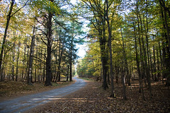 The Winding Road D7C_5812. Explored (iloleo) Tags: landscape ontario hillisland nature fall trees autumn scenic nikon d750