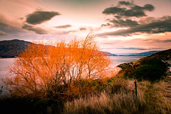 Red autumn (amcatena) Tags: autumn leaves sky lake forest sunset clouds tree orange new zealand fors