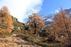 Lötschental (bulbocode909) Tags: valais suisse lötschental montagnes nature arbres mélèzes automne paysages nuages vert jaune orange bleu