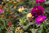 Garden (Kevin Tataryn) Tags: nikon d500 1755 montreal canada nature