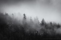 Foggy forest Squamish --6 (tristanrayner.com) Tags: green blackandwhite bw fog mist fall autumn winter seasons rain clouds pnw bc british columbia squamish