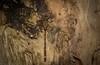 Acanthaeschna victoria (dustaway) Tags: arthropoda insecta odonata anisoptera telephlebiidae acanthaeschnavictoria thylacinedarner dragonfly australianinsects wardellheathlands wardell northernrivers northcoast nsw nature australia australianwildlife threatenedspecies