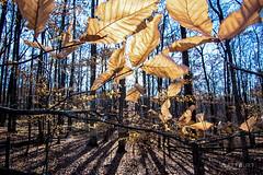 IMGP6567-Edit.jpg (Matt_Burt) Tags: shadow annarbor backlight light sun leaves woods forest michigan