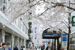 DSC_3560 (維尼賈許) Tags: 2017tokyotrip d610 day7 japan nikon24120mmf4ged 八重洲地下街 日本 chiyodaku tōkyōto jp