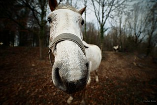 Wide angle horse