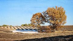 La Provence sous la neige. (Tinou61) Tags: provence alpesdehauteprovence paca plateaudevalensole lavande hiver neige paysage