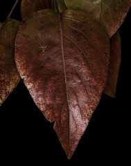 0246937379-95-Fall Colors-2 (Jim There's things half in shadow and in light) Tags: 2017 canon5dmarkiv color design macrophotography tamronsp90mmf28dimacro11vcusd autumn december fallleaves leaf leaves macro nature orange red