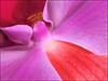 (Cliff Michaels) Tags: iphone 6 photoshop pse9 flora kroger flower