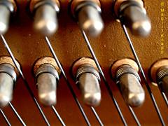 Blick ins Klavier (magritknapp) Tags: wirbel saiten klavier holz metall makro peg strings piano wood metal cordes à chevilles bois métal macro colgante madera pingente cordas madeira archi pianoforte legno metallo vortex snaren houtmetaal pinstrengen