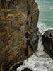 Shark's Breakfast (gomezthecosmonaut) Tags: climbing sharksbreakfast troymattingley sonya99ii seacliff routeclimbing westcoast tradclimbing charleston rockclimbing sal2470z