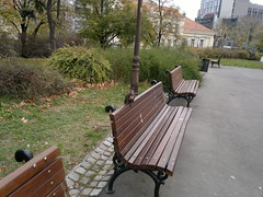 2017-11-09-11956 (vale 83) Tags: squirrel jumping off park bench nokia n8 friends flickrcolour beautifulexpression autofocus