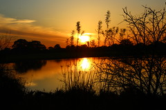 Golden Sunset (Eddie Crutchley) Tags: europe england cheshire outdoor nature beauty sunset silhouette reflections lake simplysuperb greatphotographers