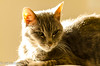 Make it well done (vlxjeff) Tags: d7000 cat sun sunny warm comfortable couch feline shadow sleeping