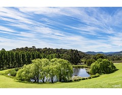 Whispy (red stilletto) Tags: yarravalley tarrawarra tarrawarraestate winery vineyards lake trees sky clouds grass